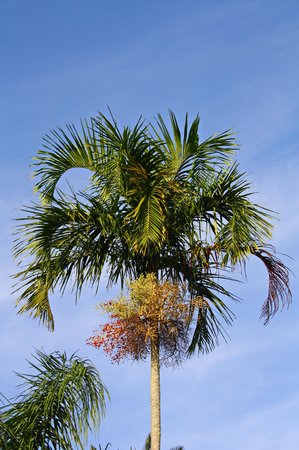 Fairchild Tropical Botanic Garden: a great day it was