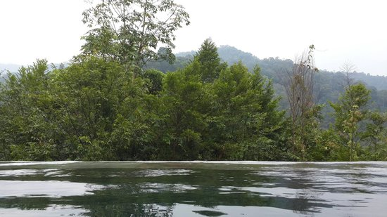 The Shorea : Infinity pool