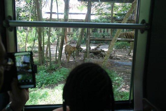 Bali Safari & Marine Park : Safari Journey
