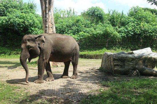 Bali Safari & Marine Park : Elephant Area at Safari Journey