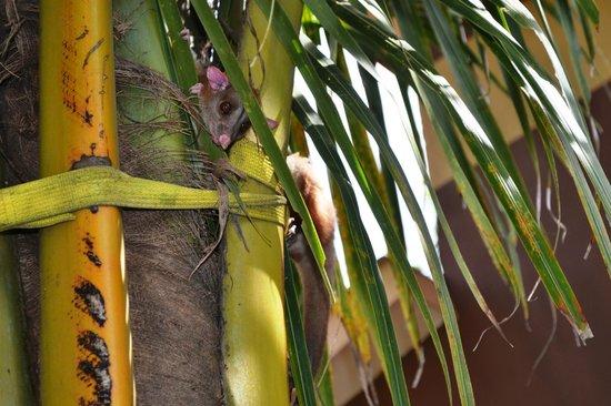 Samara Palm Lodge: ein unerwarteter gast