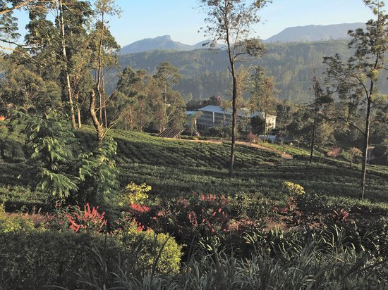 Ceylon Tea Trails: The view from the bungalow towards the tea factory