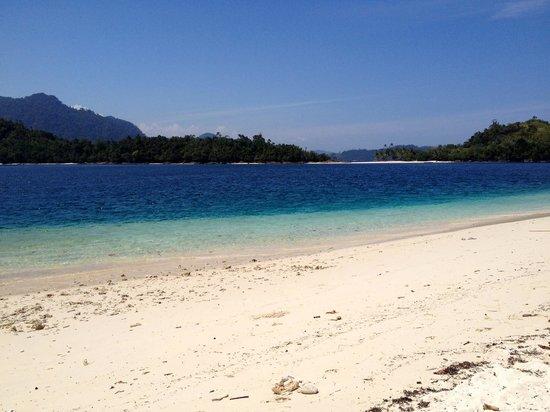 ronis paradise pics