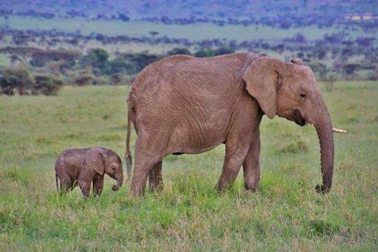 Olare Mara Kempinski Masai Mara: Masai Mara National Reserve