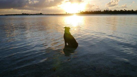Hotel Kia Ora Resort & Spa : キアオラのアネックス ル・ソバージュの犬 ブル