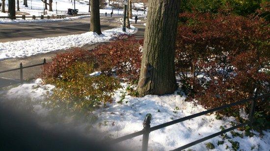 Central Park: リスがいます。