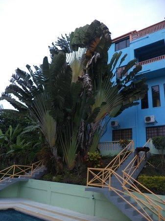 Hummingbird Heights : beautiful palm