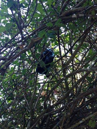 Boquete Garden Inn: Ardilla traviesa