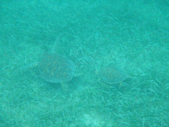 Tamarindo Beach: Turtles