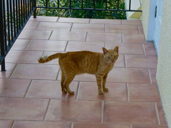 Serendip Vacation Condos : Cute feral cat that hangs out outside