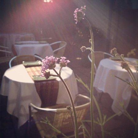 Shangri-La: Summer garden