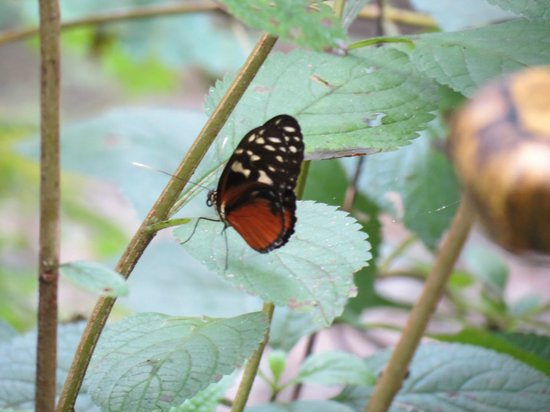 Tree of Life Wildlife Rescue Center and Botanical Gardens : Butterfly