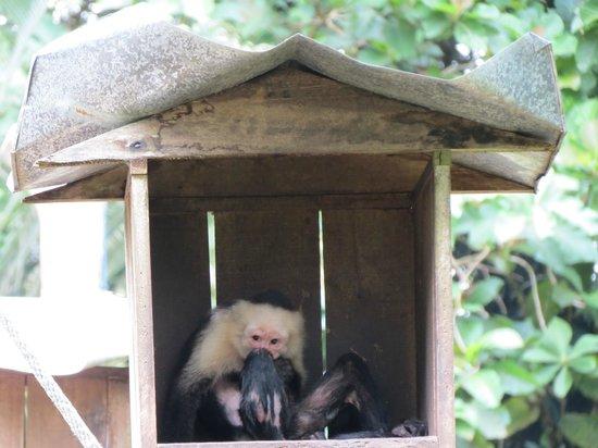 Tree of Life Wildlife Rescue Center and Botanical Gardens : Monkey