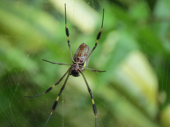 Tree of Life Wildlife Rescue Center and Botanical Gardens : Spider