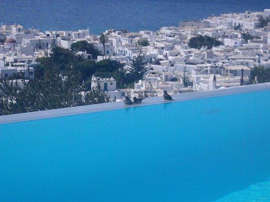 Vencia Hotel: Piscina com borda infinita
