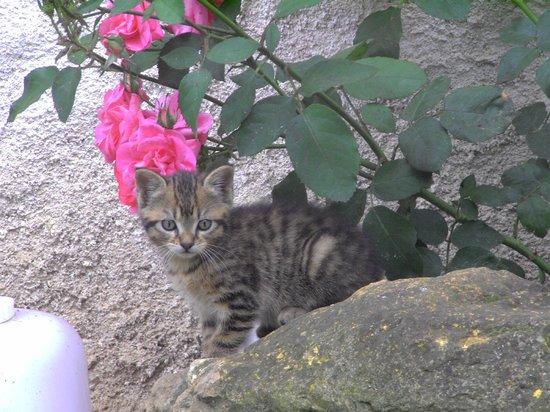 Fenêtre sur Loire : chaton