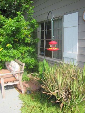 ZenYard Uptown Inn : la mangeoire des colibris !
