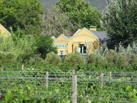 Franschhoek Country House & Villas : vue des vignes