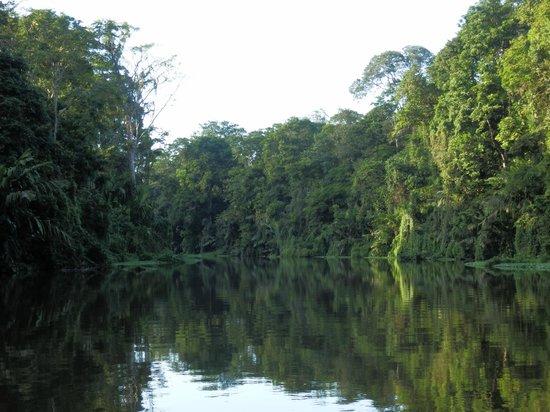 Pachira Lodge: paseo por e lparque nacional Tortuguero