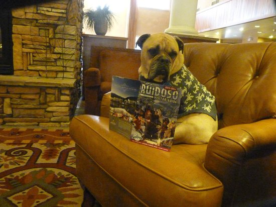 MCM Elegante Lodge & Suites: Jack checks out the happenings in the Ruidoso Visitor Guide while warming himself by the Lobby F