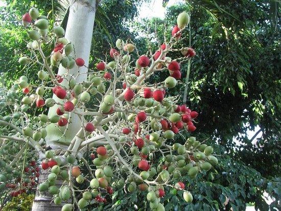 Zawadi Residence : particolari del giardino