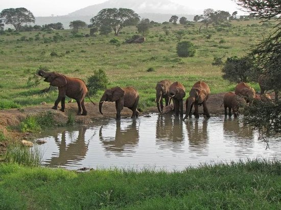 Zawadi Residence : Safari Tsawo Ovest