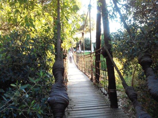 Camps Bay Retreat : Le pont
