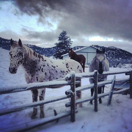 Wildhorse Mountain Guest Ranch: Waiting for you to come ride us!