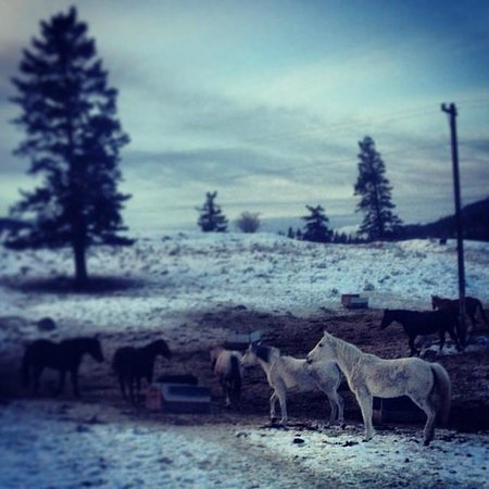 Wildhorse Mountain Guest Ranch: Winter horses