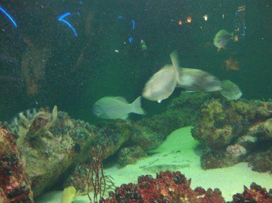 National Aquarium: Várias espécies de peixes