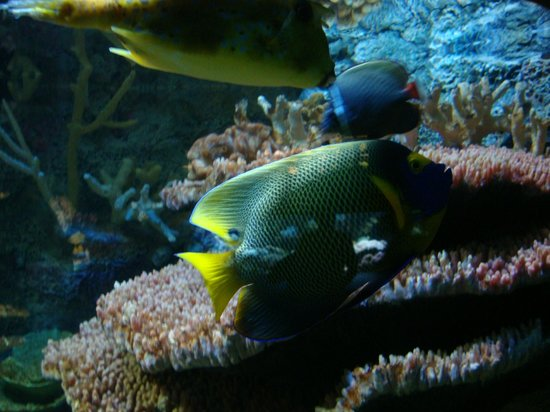 National Aquarium : Peixes coloridos