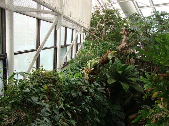National Aquarium: Parte da Rain Forest