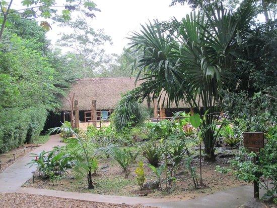 Mariposa Jungle Lodge : Grounds