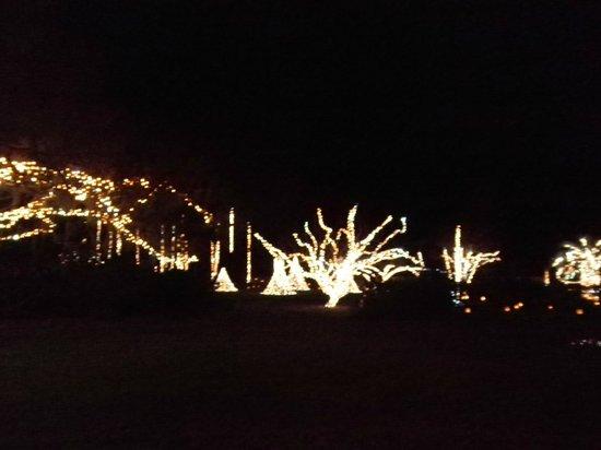 Brookgreen Gardens : Nights of a Thousand Lights 3