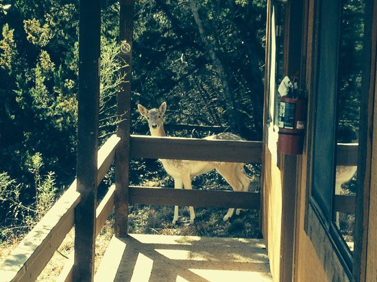 Mountain View Lodge: Morning Visitor