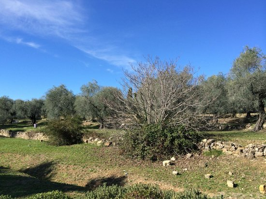 Club Med Opio Provence : Olive Grove