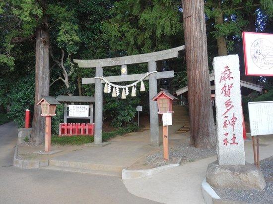 Makata Shrine : 鳥居