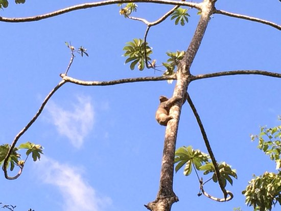 Villas San Rafael Natural Paradise Resort: ¡Un visitante sorpresa a llegado!
