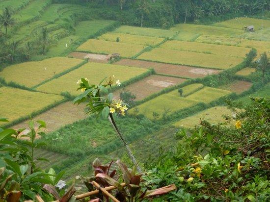 Lereng Agung: arrozales