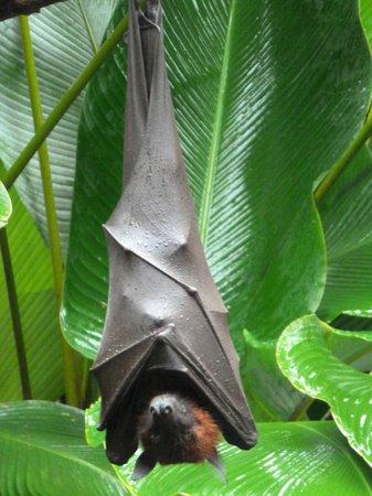 Lereng Agung: murciélago en la puerta del restaurante