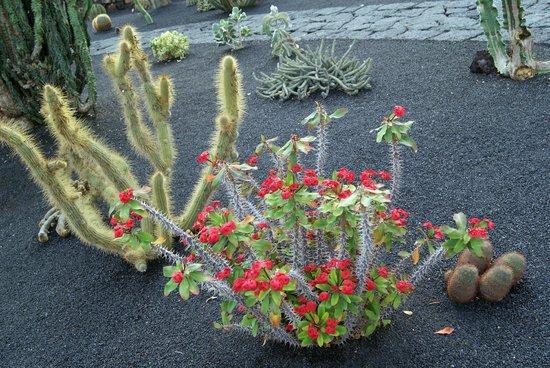 Jardin de Cactus : Particolare del girdino