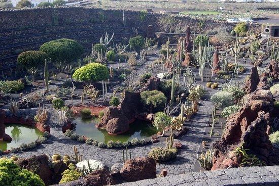 Jardin de Cactus : Panorama del giardino