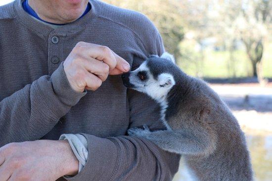 Safari Wilderness: feeding the Lemurs