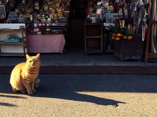 Narita Rainbow Tours: A shop cat at the temple shop