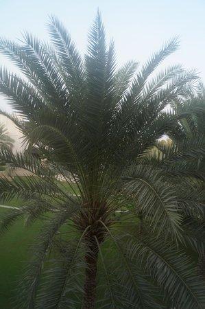 Shangri-La Al Husn Resort & Spa: not the best view