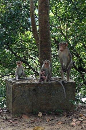 Shravanam Greens : The 'custodians' of the wildlife park we toured
