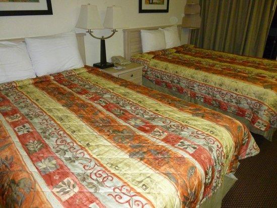 Baymont Inn & Suites Tampa Near Busch Gardens: Camas