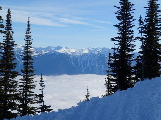 White Grizzly Cat Skiing: What a view