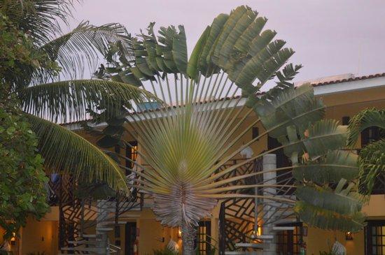 Hotel Aconchego Porto de Galinhas: Muito verde