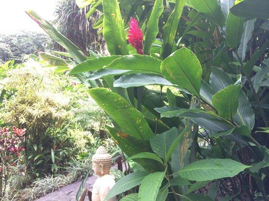 Tabacon Thermal Resort & Spa : Spa / Hot Spring